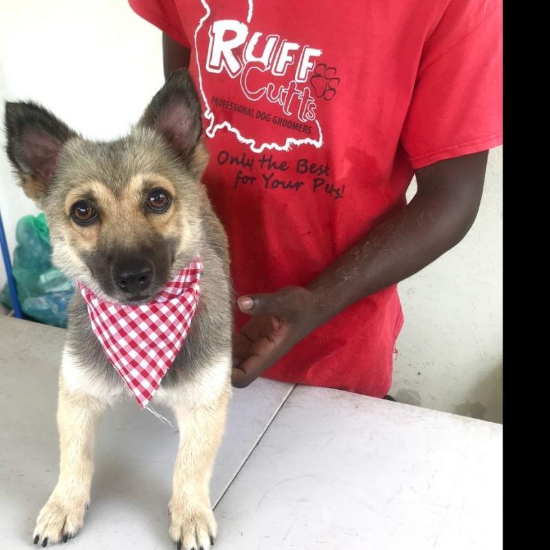 Ruff Cutts Dog Grooming Servicwa