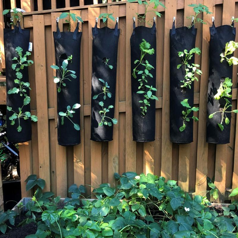 Hung Deck Gardens, LLC