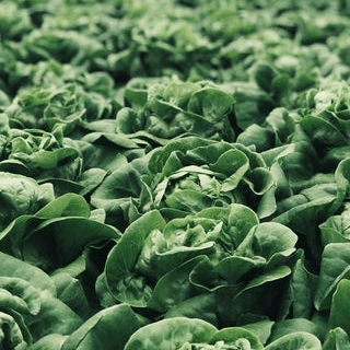 Sustainable Food Advocates: Growing Food with Health Education
